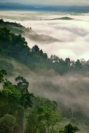 tropical forest: Misty fog on the mountain in tropical forest, Thailand