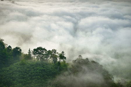 fog white: Misty fog on the mountain in tropical forest, Thailand