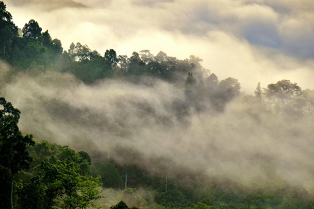 fog forest: Misty fog on the mountain in tropical forest, Thailand