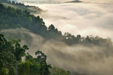 Misty fog on the mountain in tropical forest,thailand 版權商用圖片 - 43492515
