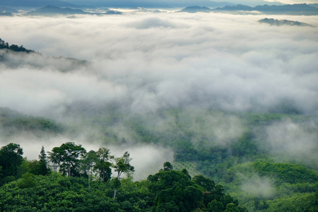 fog white: Misty fog on the mountain in tropical forest,thailand
