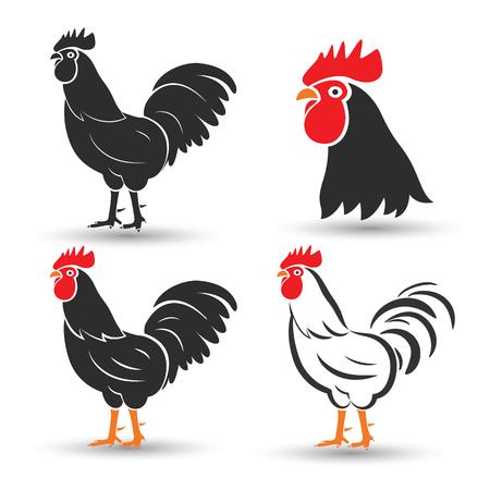 pollo caricatura: Pollo y gallo mano boceto dibujado en el fondo blanco, ilustraci�n vectorial