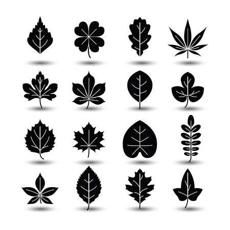 oak leaves: Outlined tree leaf line icons,vector illustration