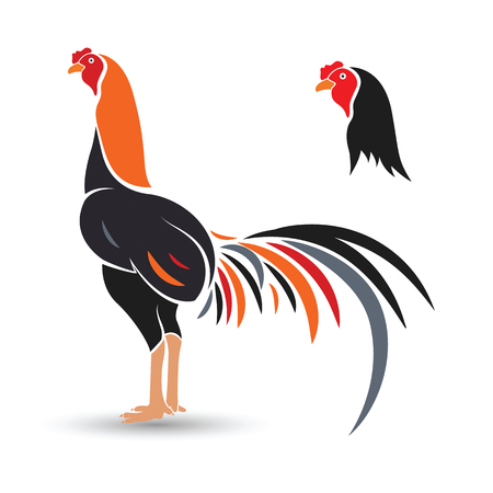 animal cock: Game-cock hand drawn sketch on white background , vector illustration Illustration
