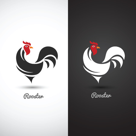 poultry: Rooster and cock hand drawn sketch on white background , vector illustration
