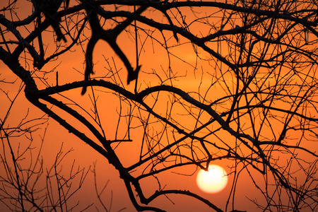 tree branch: Beautiful landscape with tree Branches silhouette at sunset