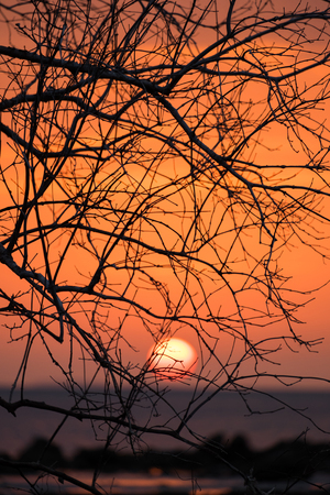 tree silhouette: Beautiful landscape with tree Branches silhouette at sunset