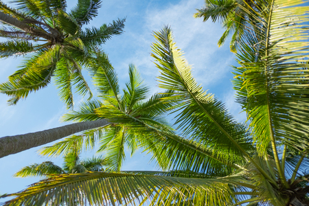 Coconut palm trees perspective lower view Stock Photo