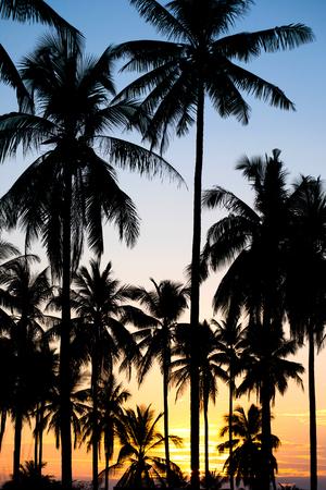 arbres silhouette: silhouette des cocotiers sur le coucher du soleil