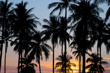 sky sun: silhouette of coconut palm trees on sunset Stock Photo