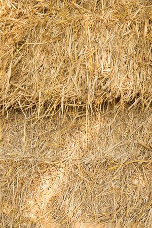 hayrick: Dry yellow hay, closeup texture Background