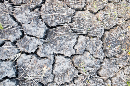 land plant: Cracks in the land in rural areas,clay desert texture