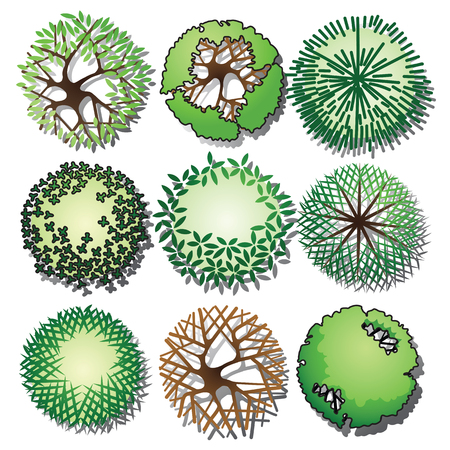 Set of trees and shrubs color. Top view use in your landscape design. Vector illustration Illustration