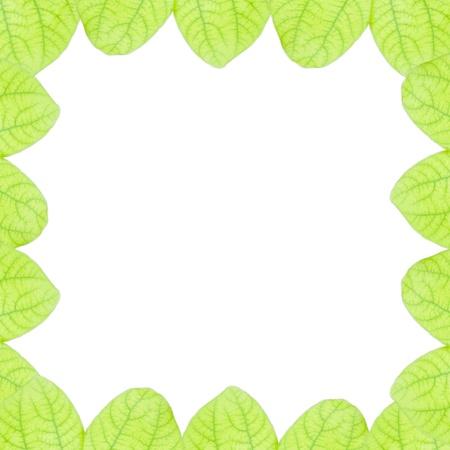 fresh green leaves border isolated on white background