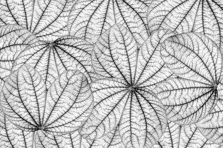 Black and white leafs seamless background