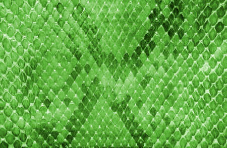 python: Snake skin green color