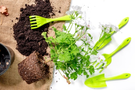 rake, trowel, ground and greenary for gardening on white desk background top view
