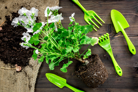 Planting flowers in garden with green instruments and plant on wooden background top view