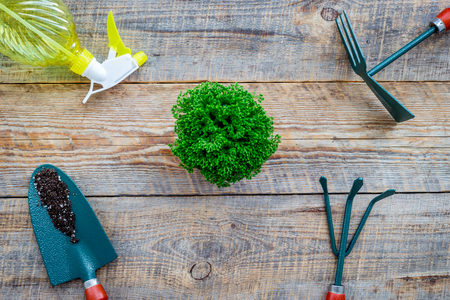 Working in garden. Gardening tools on wooden background top view Stock Photo - 82194555