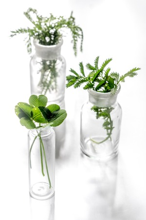 Fresh medicinal herbs in glass on white background. Stock Photo