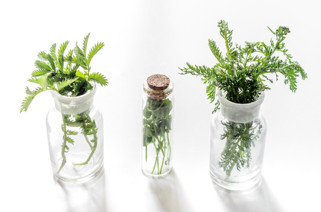 Fresh medicinal herbs in glass on white background. Zdjęcie Seryjne
