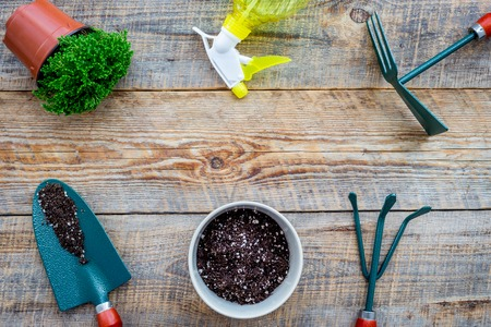 Planting flowers. Gardening tools and pots with soil on wooden background top view copyspace 版權商用圖片