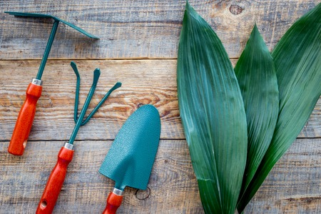 Working in garden. Gardening tools on wooden background top view Stock Photo
