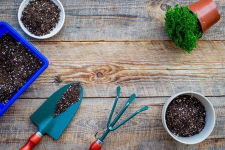 Planting flowers. Gardening tools and pots with soil on wooden background top view.