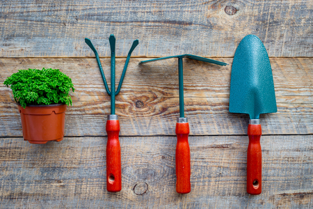 Working in garden. Gardening tools on wooden background top view. 版權商用圖片
