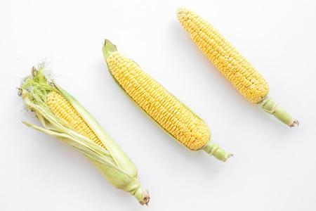 Organic farm food. Corn on cobs on white background top view. Stock Photo