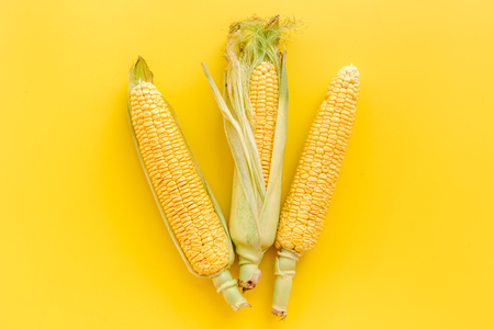 Corn on cobs on yellow background top view copyspace Stock fotó