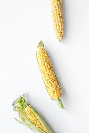 Organisch boerenvoer. Maïskolven op witte achtergrond bovenaanzicht.