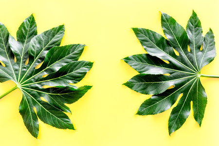 Pattern of exotic plants leafs on yellow background top view.