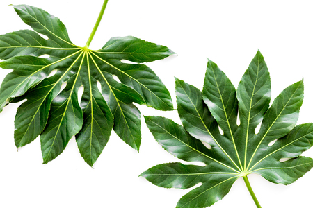 Pattern of exotic plants leafs on white background top view Stock Photo
