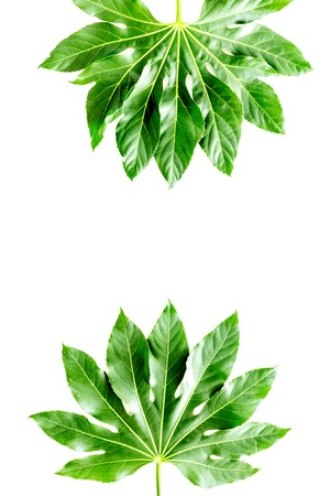Pattern of exotic plants leafs on white background top view copyspace