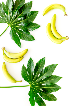 Tropical plants. Huge leaves and bananas on white background top view. Stok Fotoğraf