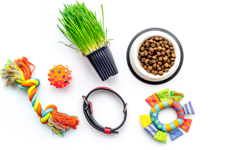 Toys for cat near dry food and grass in pot on white background top view Banco de Imagens