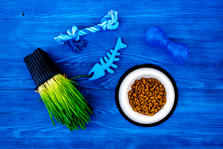 Toys for cat near dry food and grass in pot on blue wooden background top view.