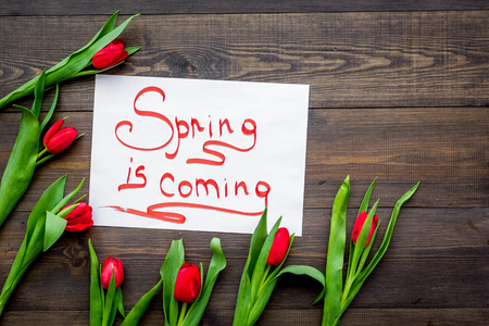 First spring flowers. Red tulips near Spring is coming lettering on dark wooden background top view copy space Stock Photo