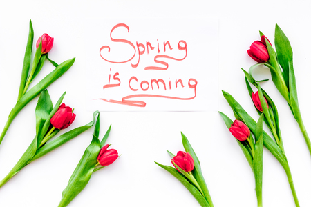 Spring is coming hand lettering surrounded by red tulips on white background top view.