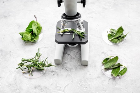 Analysing food concept. Healthy products. Herbs rosemary, mint under microscope on grey background top view.