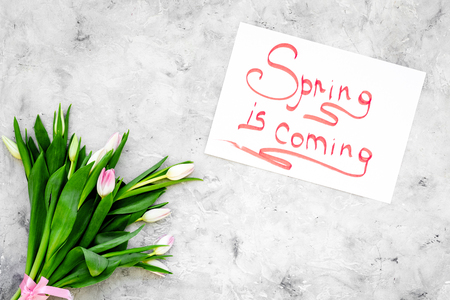 Spring is coming hand lettering surrounded by delicate tulips on grey background top view.