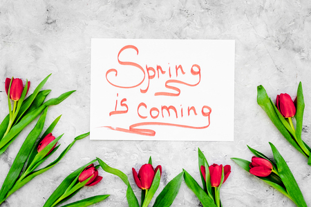 Spring is coming hand lettering surrounded by bright tulips on grey background top view. Stock Photo