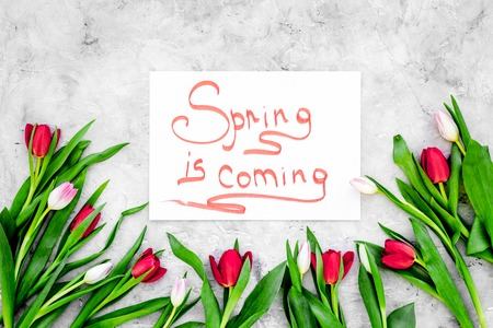 Spring is coming hand lettering surrounded by bright tulips on grey background top view. Imagens
