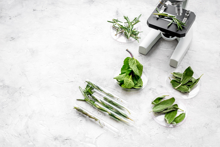 Analysing food concept. Healthy products. Herbs rosemary, mint under microscope on grey background top view space for text Reklamní fotografie