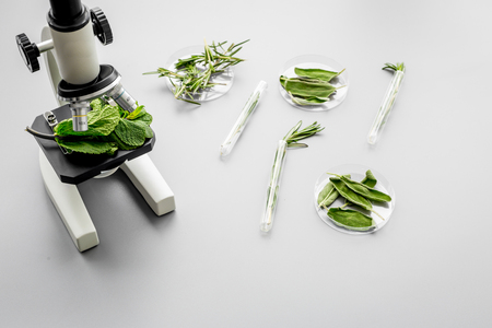 Analysing food concept. Healthy products. Herbs rosemary, mint under microscope on grey background top view copy space Stock Photo