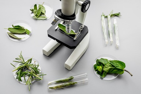 Safety food. Laboratory for food analysis. Herbs, greens under microscope on grey background top view