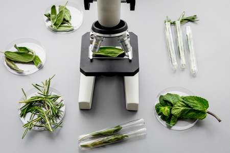 Safety food. Laboratory for food analysis. Herbs, greens under microscope on grey background top view. Stock Photo