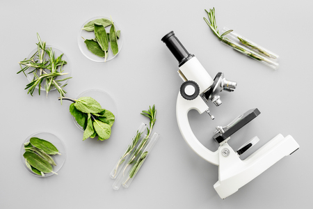 Safety food. Laboratory for food analysis. Greens near microscope on grey background top view Stock Photo