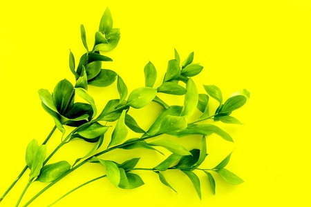 Summer background. Young sprig with green foliage on yellow top view Imagens